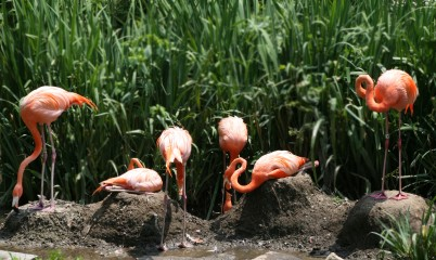Flamingo Party on the Lawn