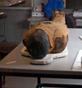 Eqyptian mummy